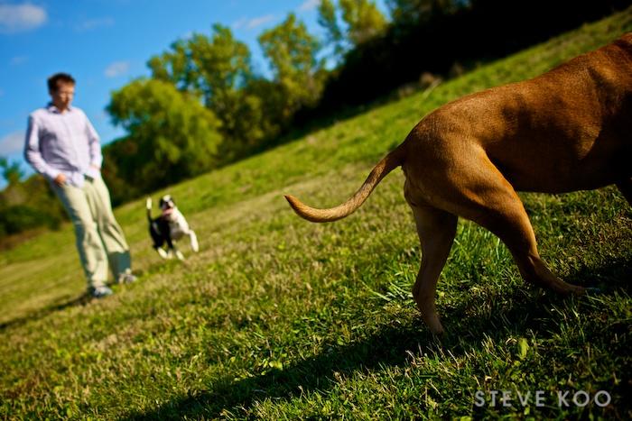 dog-tail