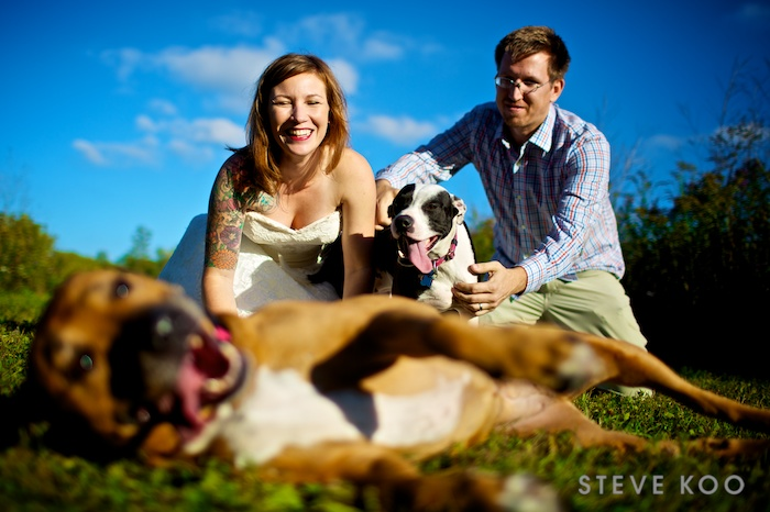 wedding-photos-with-dogs