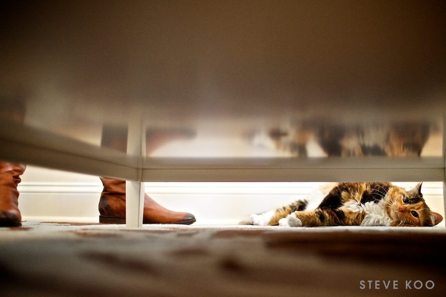 cat-engagement-photos-0002