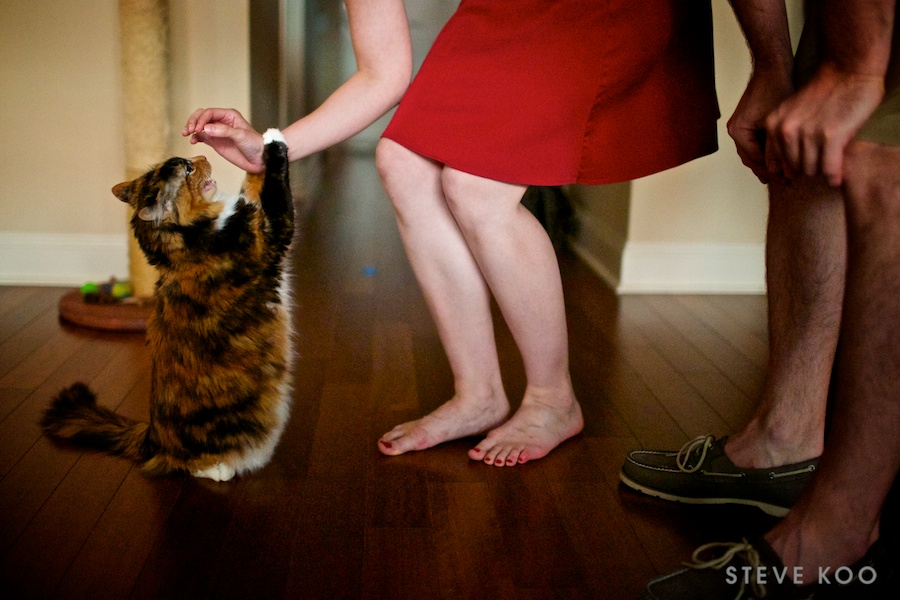 cat-engagement-photos-0004