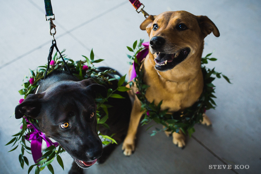 dogs-at-wedding
